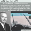 WTF Fun Fact – Windshield Wipers