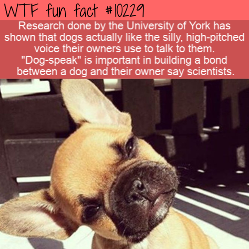 WTF Fun Fact - Dog-Speak
