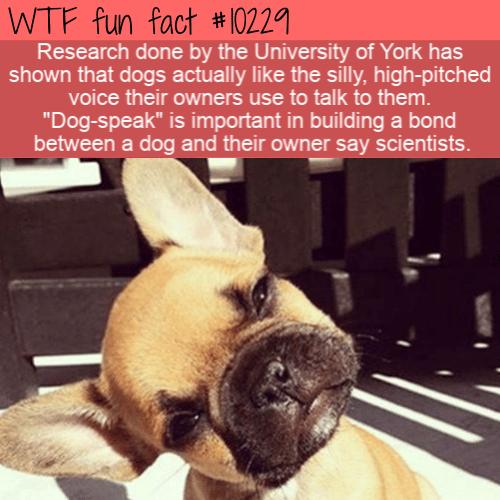 WTF Fun Fact - Dog-Speak