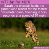 WTF Fun Fact – Fastest Animal