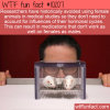 WTF Fun Fact  – Female Test Subjects