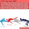 WTF Fun Fact – Fosbury Flop