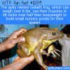 WTF Fun Fact – Goliath Frogs Build Ponds