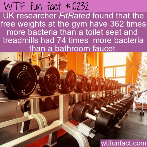 WTF Fun Fact - Dirty Gym
