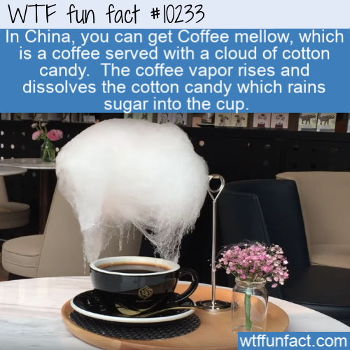 WTF Fun Fact - Coffee Mellow