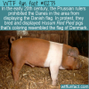 WTF Fun Fact – Husum Red Pied Protest Pig