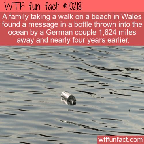 WTF Fun Fact - Message Bottle