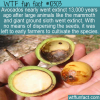 WTF Fun Fact – Wild Avocado Extinction