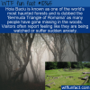 WTF Fun Fact – Hoia Baciu