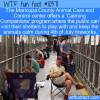 WTF Fun Fact – Calming Companions
