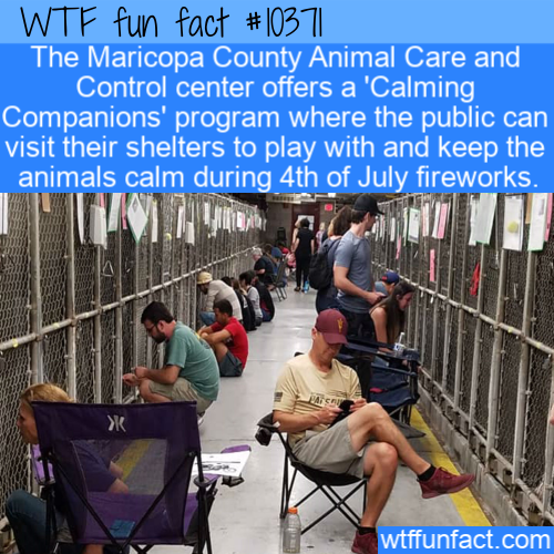 WTF Fun Fact - Calming Companions