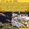 WTF Fun Fact – Weird Clownfish Life
