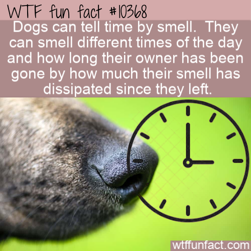 WTF Fun Fact - Dogs Smell Time