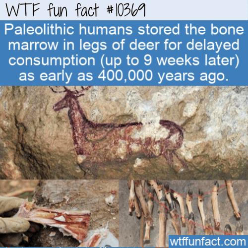 WTF Fun Fact - Dry Bone Marrow