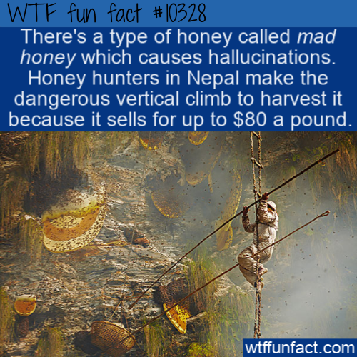 WTF Fun Fact - Hallucinogenic Honey