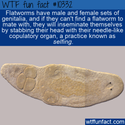 WTF Fun Fact - Flatworm Selfing