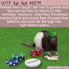WTF Fun Fact – Gambling Rats