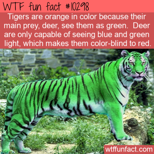 WTF Fun Fact - Green Tigers
