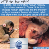 WTF Fun Fact – Human-Monkey Hybrid