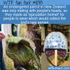 WTF Fun Fact – Ejaculation Helmet