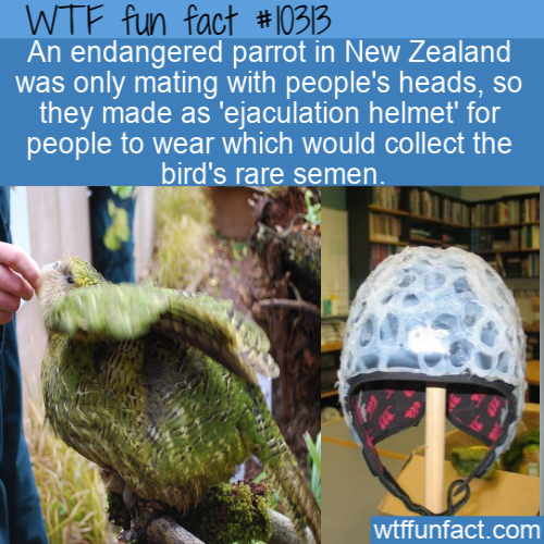 WTF Fun Fact - Ejaculation Helmet
