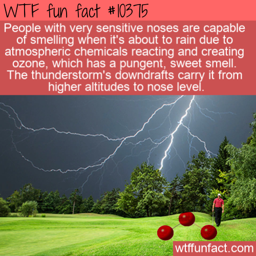 WTF Fun Fact - Smell Ozone