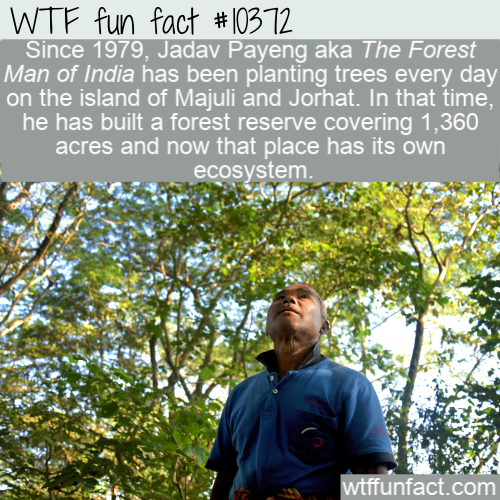 WTF Fun Fact - The Forest Man