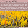 WTF Fun Fact – Trembling Giant Dying