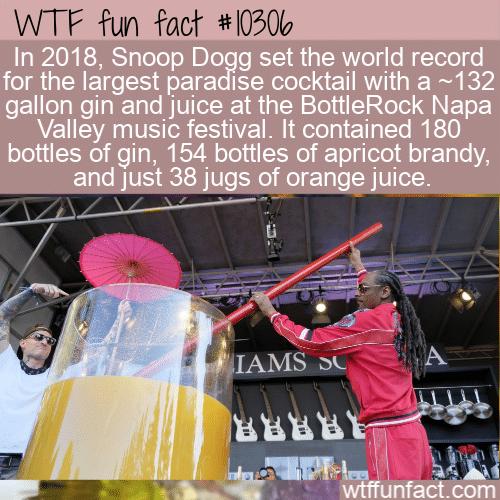 WTF Fun Fact - World Record Gin And Juice