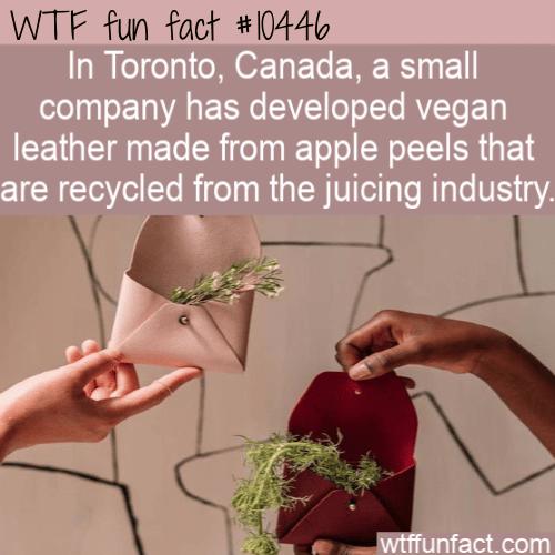 WTF Fun Fact - Apple Leather