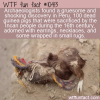 WTF Fun Fact – Bejeweled Guinea Pigs
