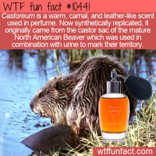 WTF Fun Fact - Castoreum