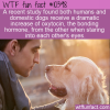 WTF Fun Fact – Stare Into Your Dogs Eyes