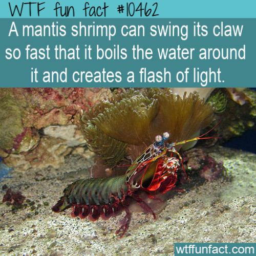 WTF Fun Fact - Fastest Punch