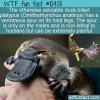 WTF Fun Fact – Venomous Platypus