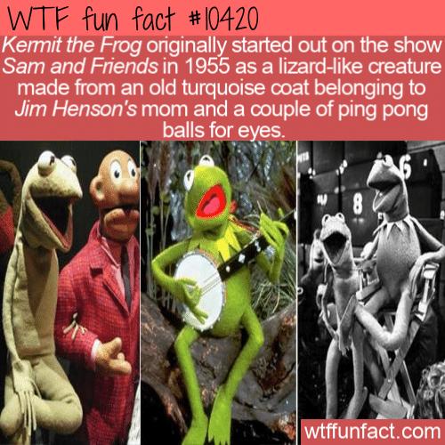 WTF Fun Fact - Kermit The Lizard