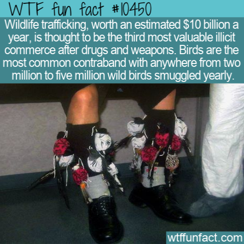 WTF Fun Fact - Most Smuggled COmmodity