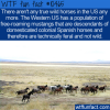 WTF Fun Fact – Wild Horses No More