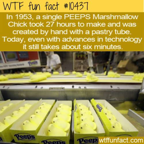 WTF Fun Fact - One Chick In 6 Minutes