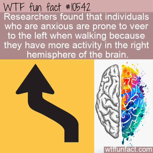 WTF Fun Fact - Anxious People Veer Left
