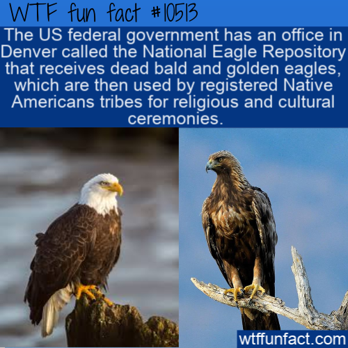 WTF Fun Fact - Dead American Eagles