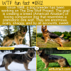 WTF Fun Fact – The Dire Wolf Project