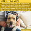 WTF Fun Fact – Who Let The Dogs Rock Out?