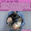 WTF Fun Fact – Drooping Ears Trait