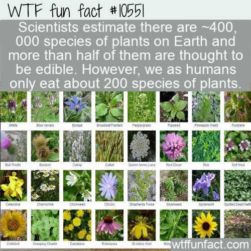 WTF Fun Fact - Edible Plants