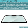 WTF Fun Fact – Frit Black Windshield Border