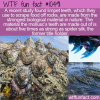 WTF Fun Fact – Strongest Material In Nature