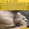 WTF Fun Fact – Muscle Little Mouse