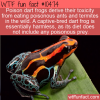 WTF Fun Fact – Poison Dart Frogs Diet