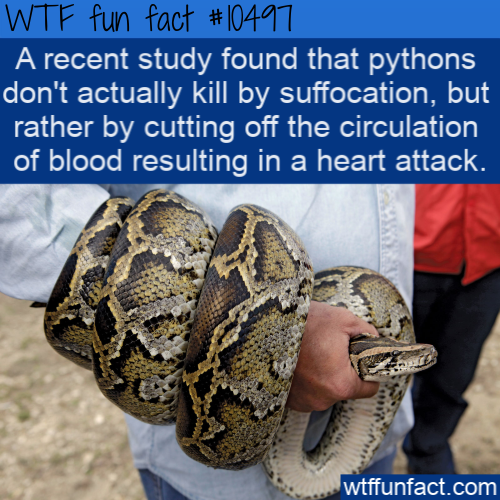 WTF Fun Fact - Pythons methods